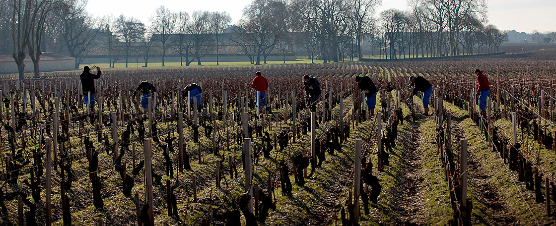 Everything at Mouton, from the tending of the vines to the bottling of the wines, is done by the best specialists