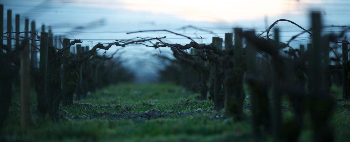 Le vignoble médocain est planté sur une étroite bande de terre, proche du fleuve qui l'irrigue en profondeur et modère les écarts de température.