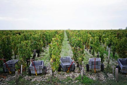 Chateau Mouton Rothschild harvest 2017
